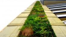 E' a Medellin il secondo giardino verticale piu' alto del mondo