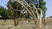 Costruire con la canna palustre