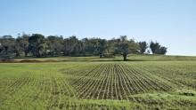 Decreto 'Terrevive', 5.500 ettari di terreni agricoli pubblici in vendita