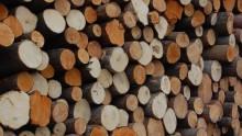 Legno e prodotti a base legno: e' corretto parlare di sostenibilita'?