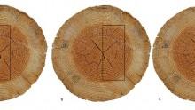 Il taglio del legno: tipologie e sezioni