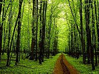 wpid-4025_alberi.jpg