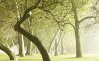 Una passeggiata tra i dieci parchi piu' belli d'italia 2010