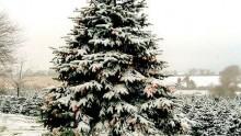 Il BosCO2 di Natale