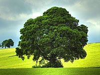 wpid-albero.jpg