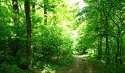 wpid-foresta.jpg