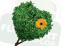 wpid-green_design.jpg