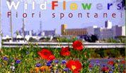 wpid-wildflowers.jpg