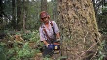 Filiera del legno: firmato accordo interregionale sul prelievo boschivo